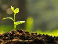Pakistan Furniture Council to plant one million saplings in next  ..