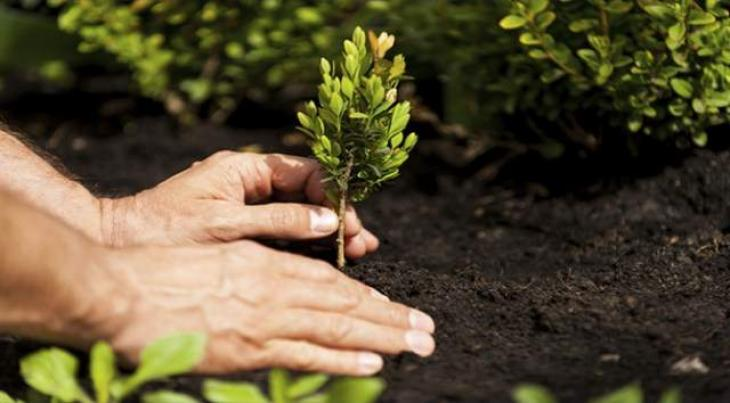 Over 1 5 Mln Saplings To Be Planted In 18 Major Cities On Sunday