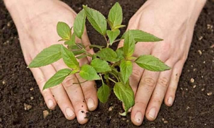 Pakistan Academy for Letters participates in tree plantation campaign