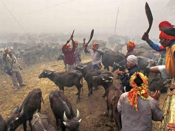 Sri Lanka to ban animal sacrifices at Hindu temples