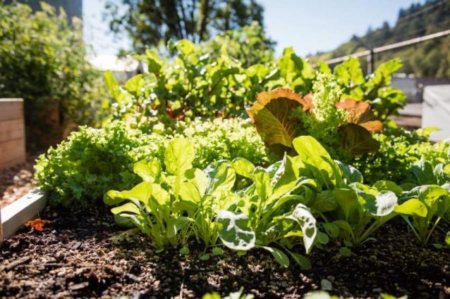 Experts stress for adopting kitchen gardening