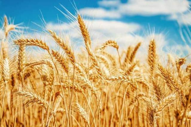 All Pakistan Flour Mills Association demands new export policy for wheat
