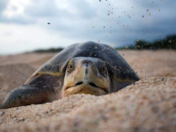 Just one piece of plastic enough to kill a turtle, CSIRO finds
