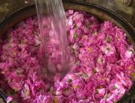 Iran world's top exporter of rose water
