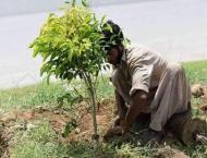 National Highway Authority planted 38,850 saplings along its netw ..