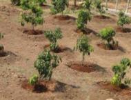 Mayor calls for planting 1,000 trees in each UC in Multan
