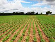 Plant biotech becomes important to Agri-sector: Expert