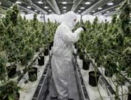 As Canada awaits, Uruguay's legal cannabis project provides bench ..