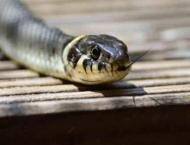 Cobra snake found in new Islamabad Airport