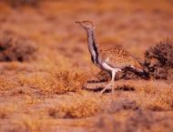 Zoological Survey of Pakistan (ZSP) responsible to undertake peri ..