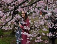 Blooming early! Japan's famed cherry blossoms make unexpected app ..