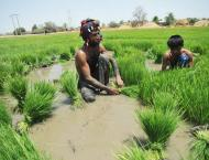 Research study confirms significant impact of climate change on a ..