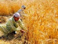 Punjab govt focusing on small farmers' uplift: Malik Nauman Ahmad ..
