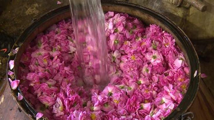 Iran world's top exporter of rose water