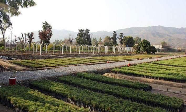 KP Govt directs active participation in Clean, Green Pakistan movement