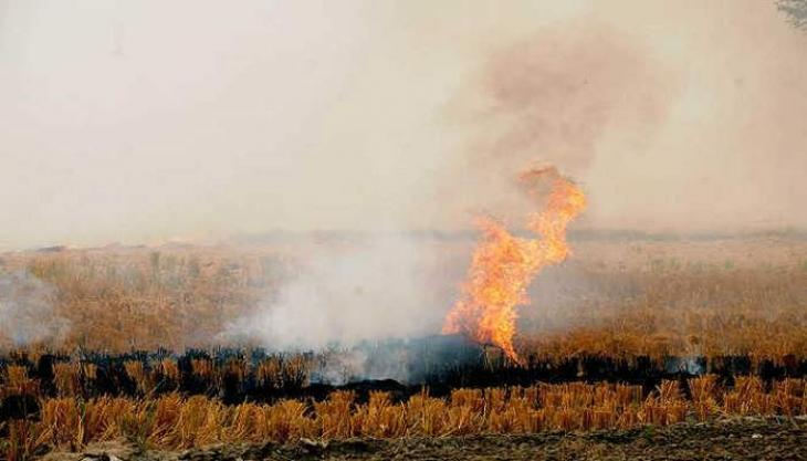 Farmers advised not to burn paddy stubble