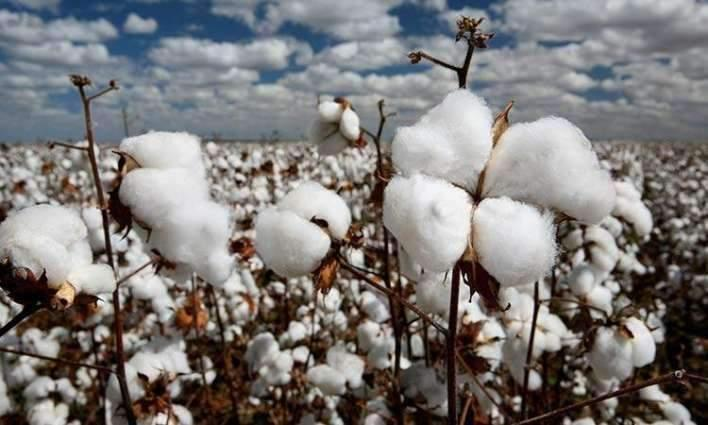 Spot rates of cotton (Crop 2018-19) 13 Oct 2018