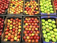 China's apple farmers benefit from futures contracts