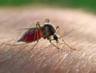 Remote PNG island conquers malaria with ancient Chinese medicine ..
