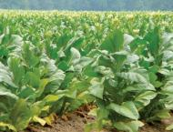 Tobacco growers demand restoration of previous agreements