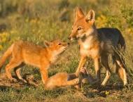 Dept takes measures to protect wildlife: RFO