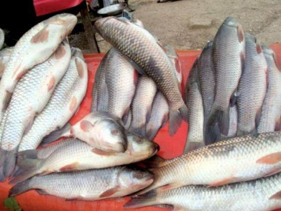 Destruction of fish habitat to affect livelihood of over 59 mln people: Experts