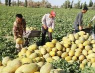 China's farm produce find easier access to Central Asia countries ..