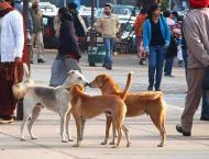Cantt residents urged authorities to launch drive against stray d ..