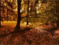 Colorful celebration of Autumn kicks off