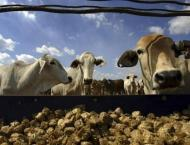Farmers' training essential for promoting of Livestock in Balochi ..