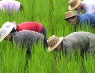 N. Korea food production down in 2018: UN body
