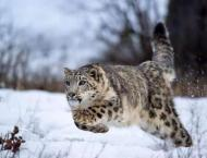 Solid measures help protect wildlife in GB: Regional Forest Offic ..