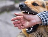 Dog bite cases increase in Lower Dir