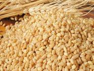 People refuse to buy substandard wheat