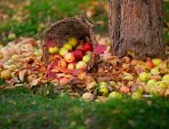 Govt embarks on plan to raise fruits, vegetables on 18000 acres l ..