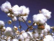 Experts' working group to promote cotton research in Balochistan ..