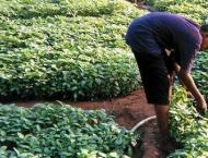 500 NGOs personnel provided services to promote Organic Kitchen F ..