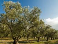 All resources being used to make Potohar an olive valley: Secreta ..