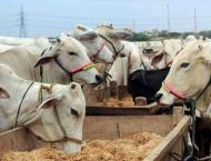 Livestock owners advised to adopt precautionary measures to prote ..