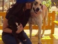 Anoushey Ashraf writes heart-warming note about animal love