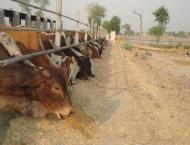 Sohail posted as AD Livestock Bahawalpur