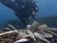 Tiny killer threatens giant clam, aquatic emblem of the Med