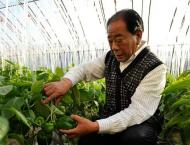Production resumes in China's major vegetable supplier