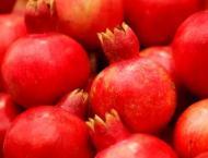 17 new fruit varieties of date, desert apple, pomegranate recomme ..
