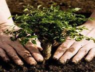 Plantation drive to kick off on Feb 8 in Jhelum