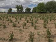 Rain to augur well for crops, orchards