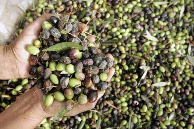 EU Fights US Import Duties On Spanish Olives - UrduPoint
