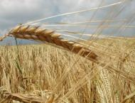 Russia May Double Wheat Exports to Mexico Next Agricultural Year  ..