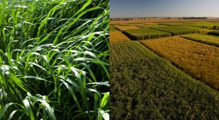US Invents in Genetic Research to Boost Yield of Bioenergy Crops - Energy Dept.