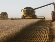 Russia's Wheat Harvest in 2019 May Total 75-78Mln Tonnes - Agricu ..